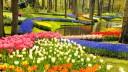 Holland tavasz és tulipánvirágzás MS Rhein Melodie****