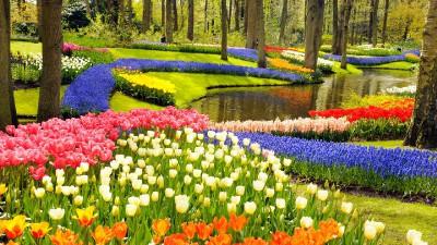 Holland tavasz és tulipánvirágzás